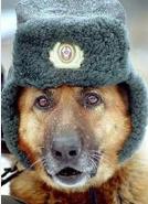funny Jewish Russian Humor pets